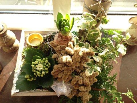 Rosenhøj i december – find materiale til din dekoration