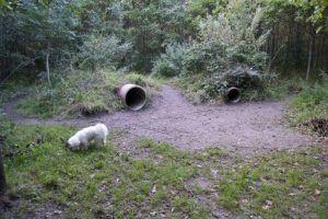 Hundeskov ved Sperrestrup Skov i Ølstykke - Vores Egedal
