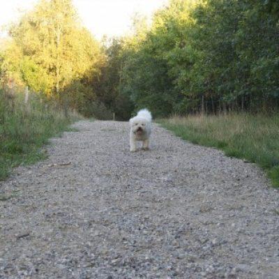 Hundeskoven ved Sperrestrup Skov (Tennisskoven)