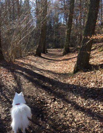 Hundeskoven ved Klokkekildevej