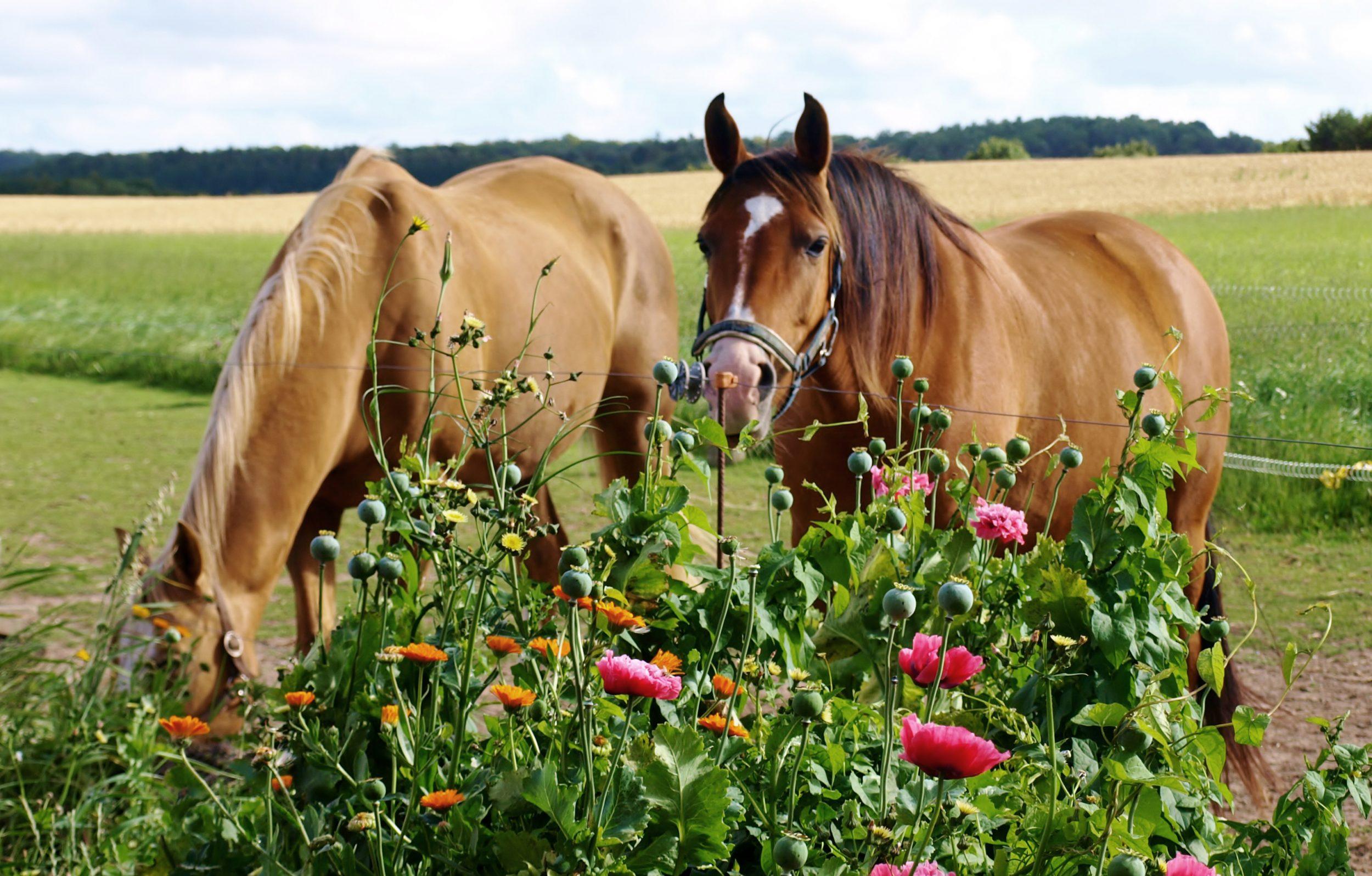 Giv hjernen et frikvarter: Lej en hest og rid en tur i Egedals skønne natur