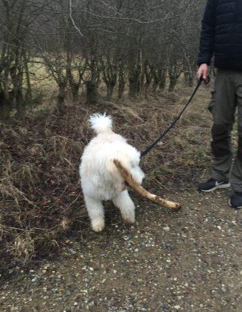 Hundeskoven ved Grønlien Skov i Frederikssund
