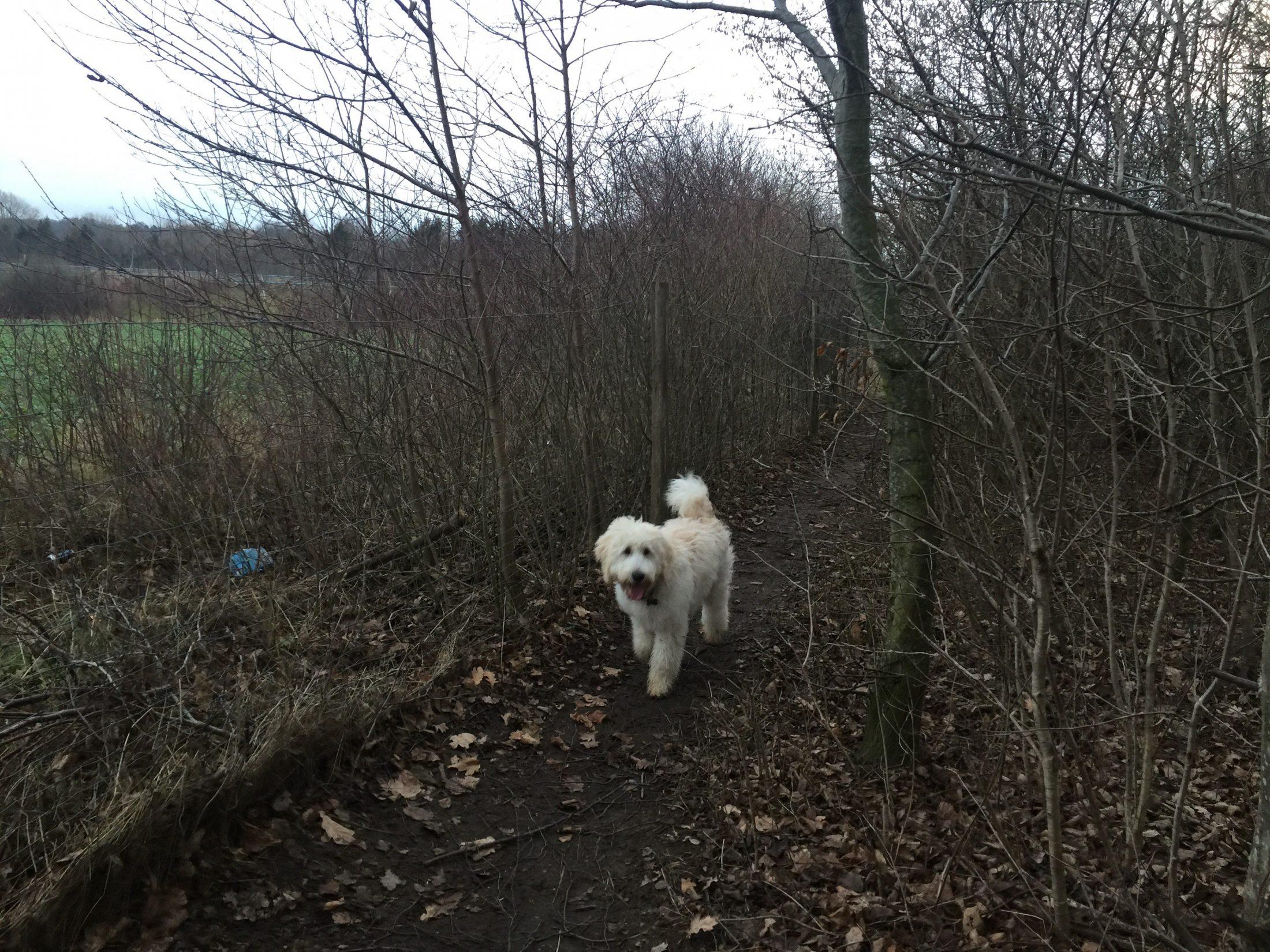 Hundeskoven ved Grønlien Skov - Vores Egedal