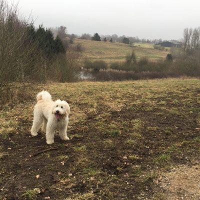 Gulddysse Hundeskov
