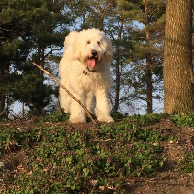 Hundeskoven ved Engen i Ølstykke