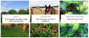*Nygård - hesteudlejning, øl og madlavning, kødsalg