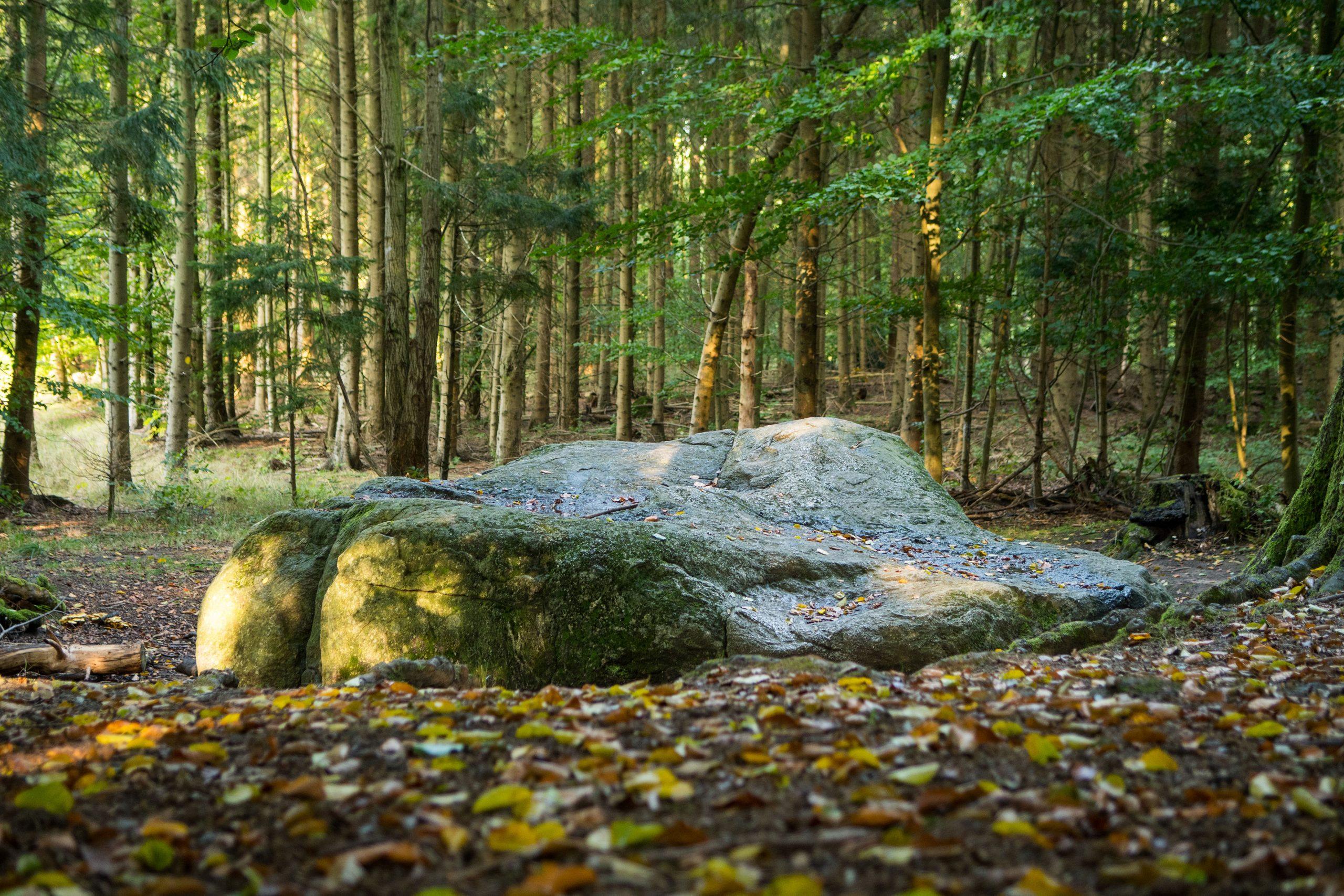 Myrestenen – Nordsjællands største vandreblok af gnejs