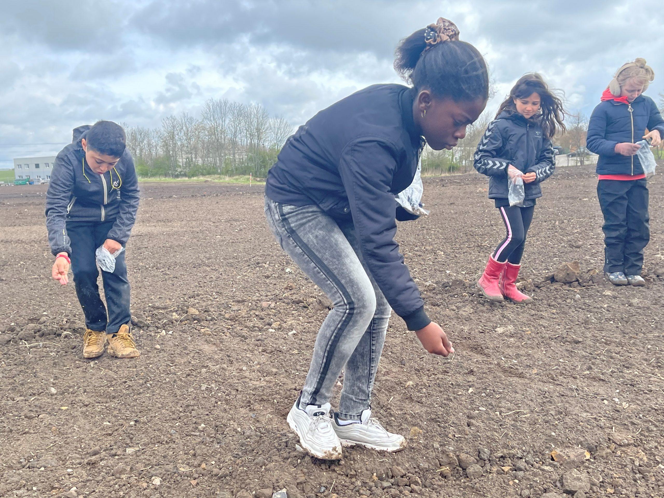 Fra jordmark til vild blomstereng: Søhøjskolens 3.a og 3.b passer på bierne